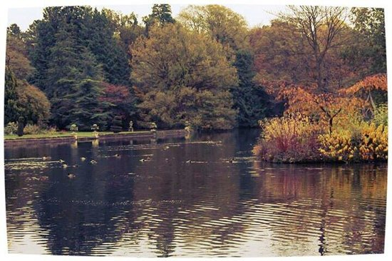 Bedale United Kingdom  City new picture : ... in autumn Picture of Thorp Perrow Arboretum, Bedale TripAdvisor