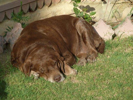 Ravla Bhenswara : Labrador du maharadja