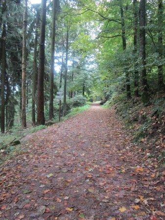 MerkurBergbahn: forest