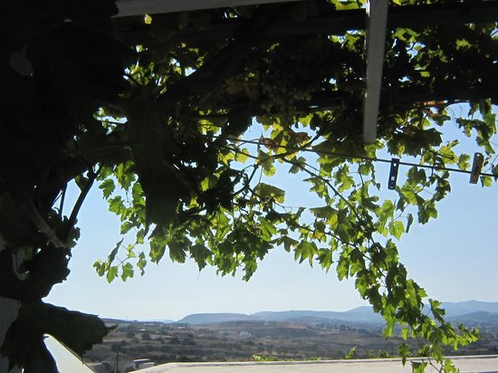 Pergolato d\'uva sul terrazzo - Picture of Hotel Agnanti, Milos ...