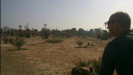 Riad Al Nour: la palmeraie