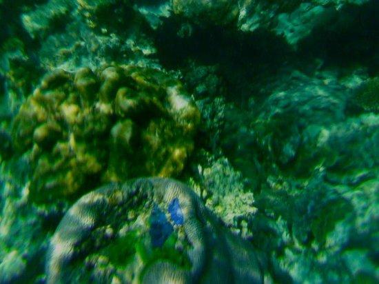 Pansand Resort Ko Bulon Lae: snorkeling