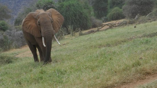 First African Dream Tours & Safaris : Note the huge tusks