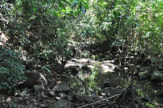 Lokobe Nature Special Reserve: Lokobe