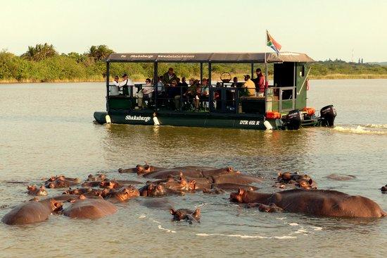 Shakabarker Tours - Day Tours : Un embouteillage d'hippopotames !
