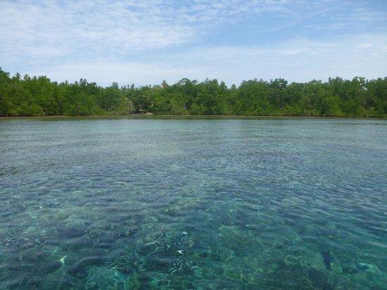 Onong Resort: Korallen soweit das Auge reicht