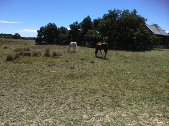 Hill Country Equestrian Lodge: Molly and Envy enjoying the sun :)