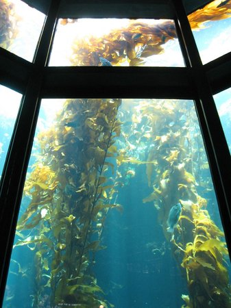 Monterey Bay Aquarium: I love this three-story exhibit!