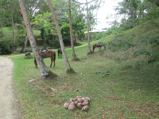 Namale the Fiji Islands Resort & Spa: Horses for horseback riding
