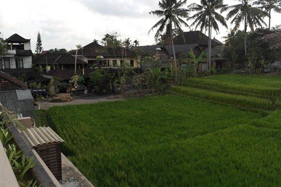 De Munut Balinese Resort: View from Outside Room