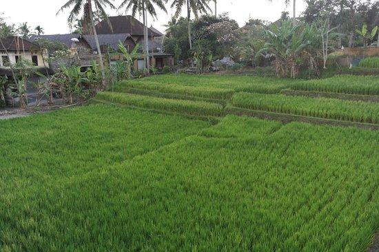 De Munut Balinese Resort: View near Room