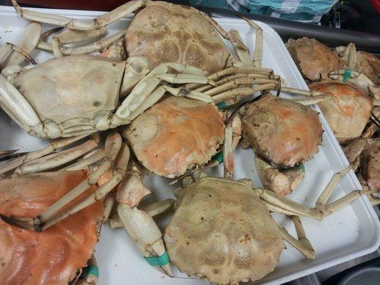 Sunset Catch Restaurant: Golden florida crab.