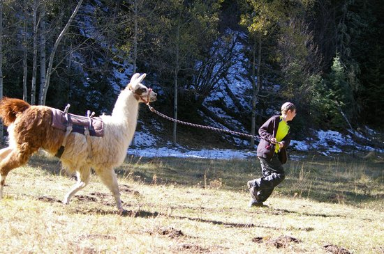 Wild Earth Llama Adventures: Llama races in the morning were one of the highlights of the day.