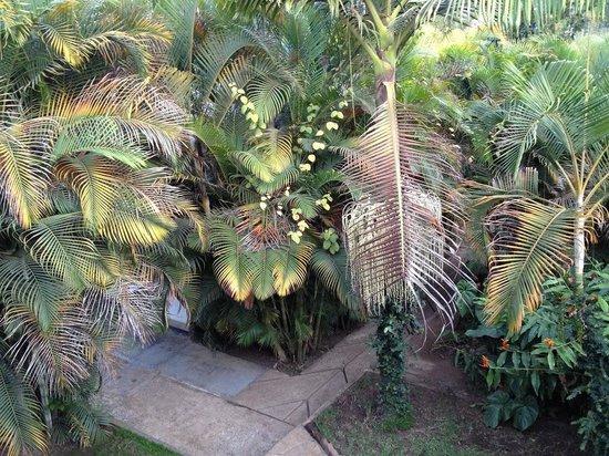 Christina House: garden