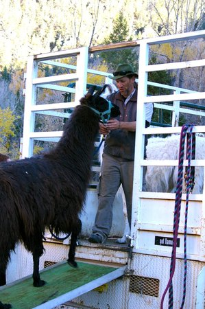 Wild Earth Llama Adventures: Stuart was so organized with each step of the experience, even when loading up the llamas at the