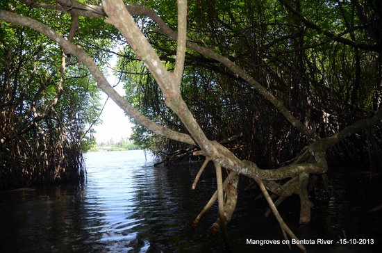 Bentota Beach by Cinnamon : boatride through mangrooves is a lifetime experience