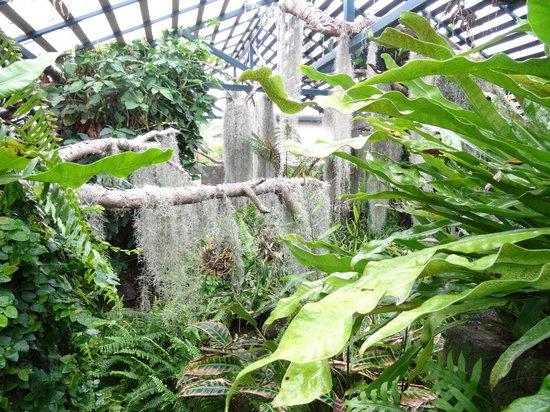 Conservatoire Botanique National : Collection de fougères