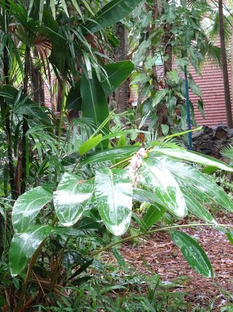 Conservatoire Botanique National : Plantes exotiques