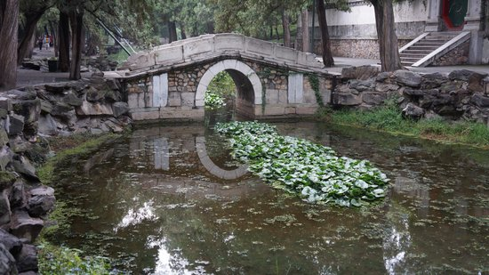 Gran Corredor del Palacio de Verano: Pond along the long corridor