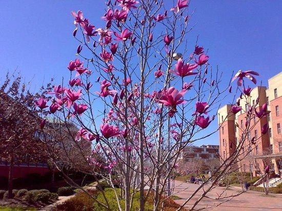 แจ็คสัน, มิซซิสซิปปี้: JSU -  uczelniane klimaty (w kwiatach)