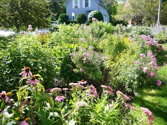 Belmont Inn : Gorgeous garden