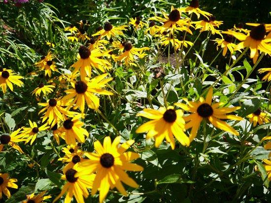 Flowers at Belmont Inn