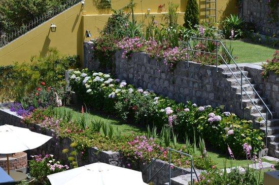 El Cabildo: Den lilla trädgården