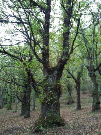Royal Hotel Montevergine: bosco stupendo