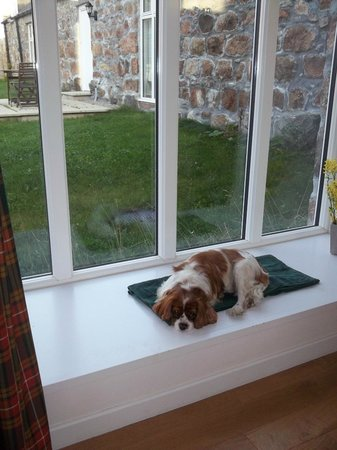 Perkhill Holiday Cottages : Poppy loved this sunny spot to relax after running around at Perkhill.