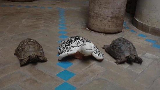 Riad Asrari: Les 2 petites tortues du Riad :)
