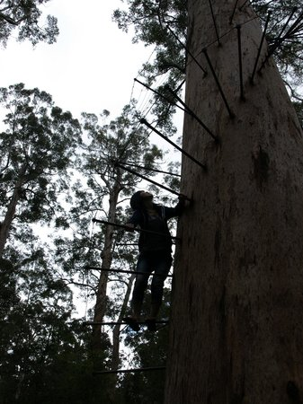 Dave Evans Bicentennial Tree: Noriko trying out the bottom rungs