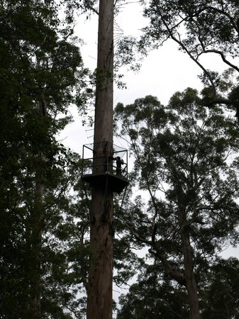 Dave Evans Bicentennial Tree: The first platform