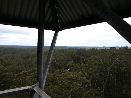 Dave Evans Bicentennial Tree: The view from the lookout