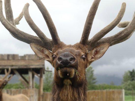 Alaska Wildlife Conservation Center: Crazy Wildlife