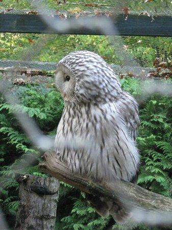 Birdworld: Owl