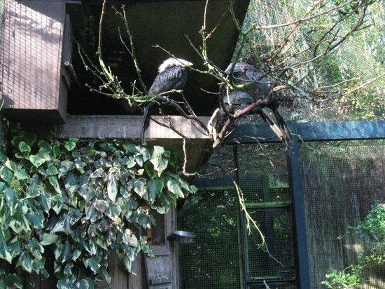 Birdworld: Hornbills