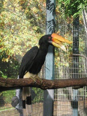 Birdworld: Rhinoceros Hornbill