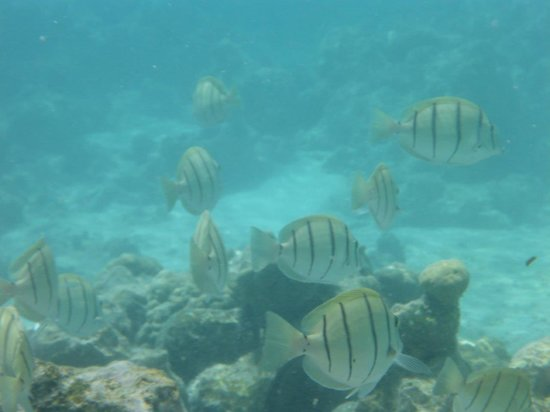Royale Takitumu : some of fish you can see