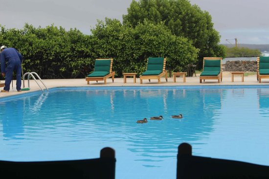 Finch Bay Eco Hotel: Ducks in the Pool