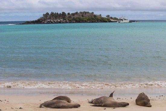 Finch Bay Galapagos Hotel: Yacht on Excursion