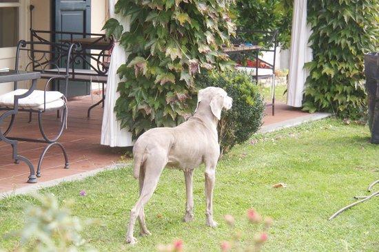 Relais La Cappella: owner's dog