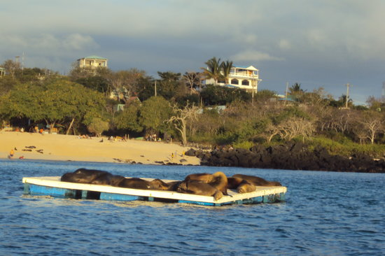 Galapagos Casa Playa Mann