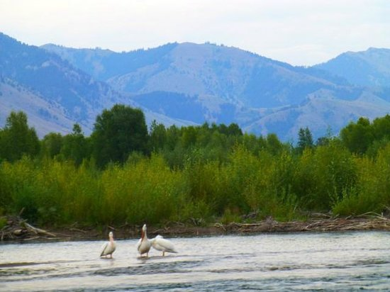 Teton Scenic Float Tours : scenery