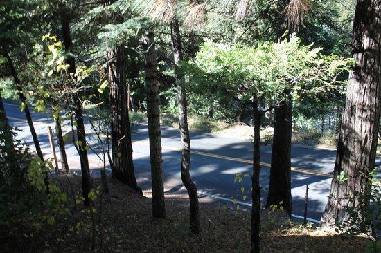 Fleur de Lac European Inn B&B: Trees and road around Fleur de Lac