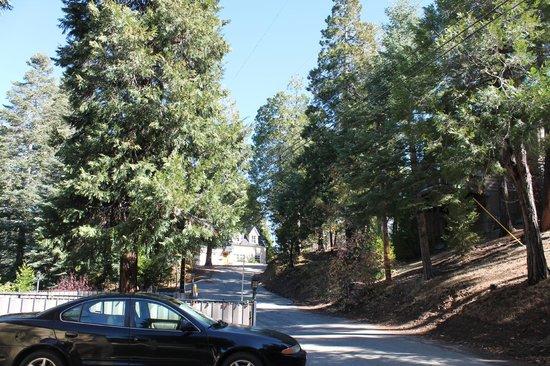 Fleur de Lac European Inn B&B: Trees around the B&B