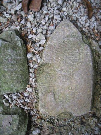 Tropical Spice Garden: Footprint
