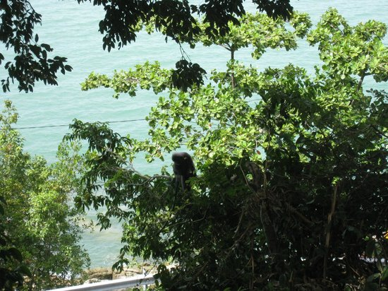 Tropical Spice Garden: where is the monkey?