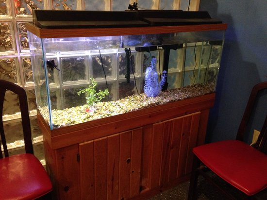 Nice clean fish tank as you enter decor is modest for How do you clean a fish tank