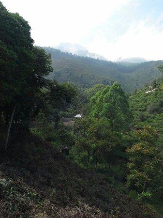 Ngawi照片