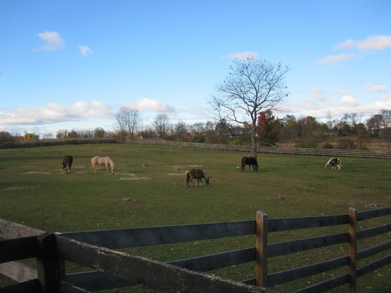Pheasant Field Bed & Breakfast: Horses in their field